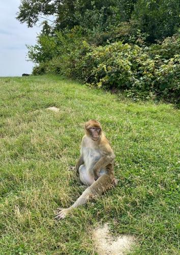 Terre des singes 01.png